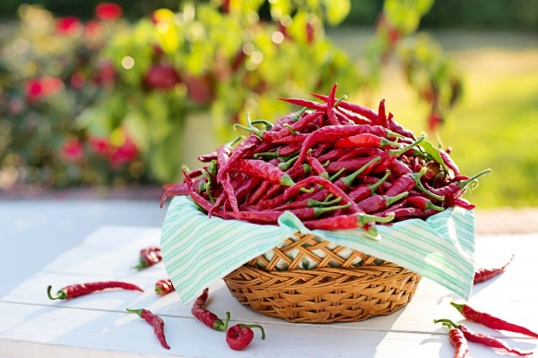 Chili_Beitragsbild_cayenne-peppers-2779828_1920